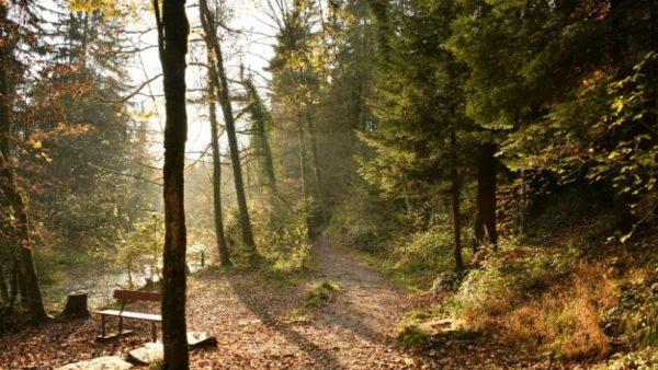 Herbst Gewohnheiten Ayurveda Yoga